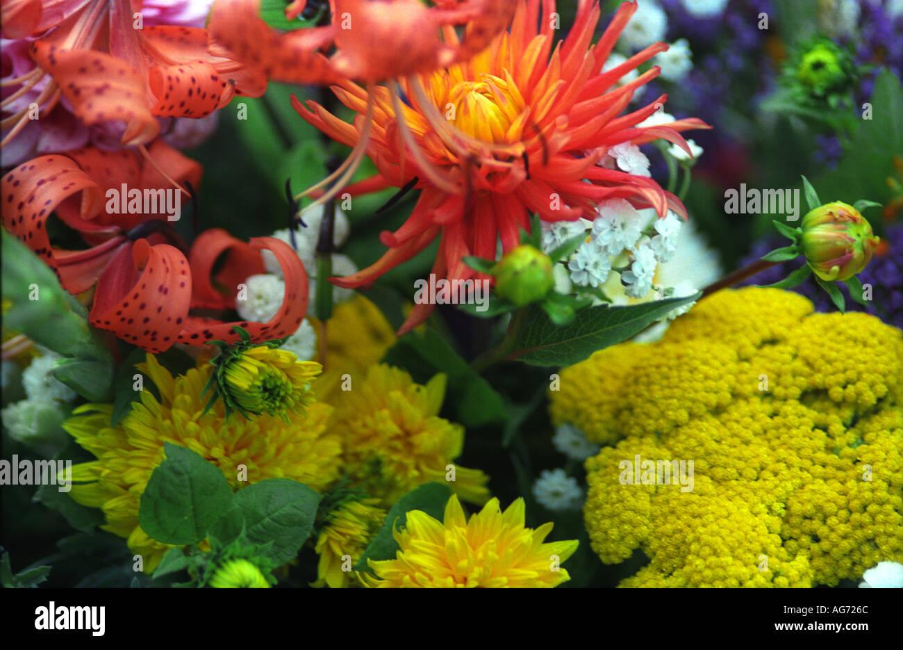 Mixes Bunch Of Spring Flowers Tasmania Australia 1754 Stock Photo