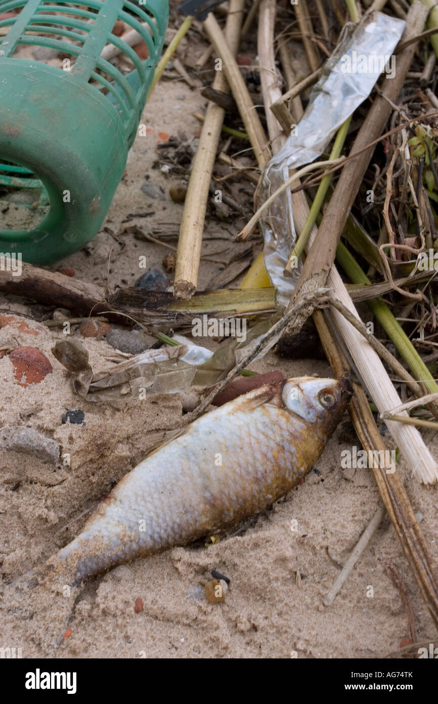 Close-up of the Debris of a Polluted Beach - Stock Image