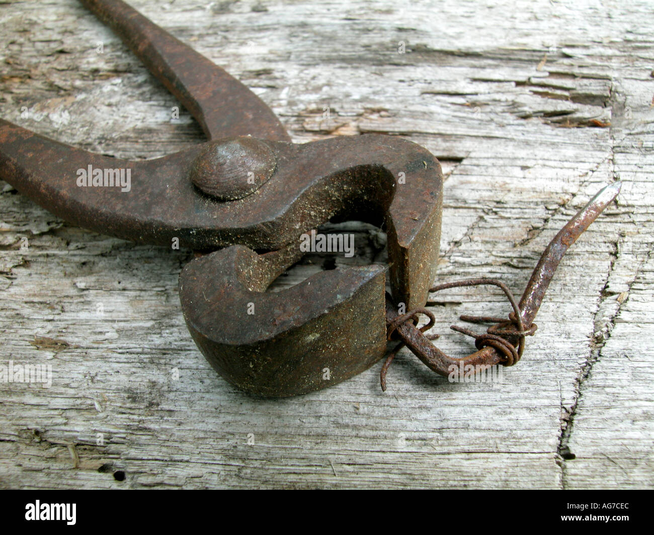 old tongs - Stock Image