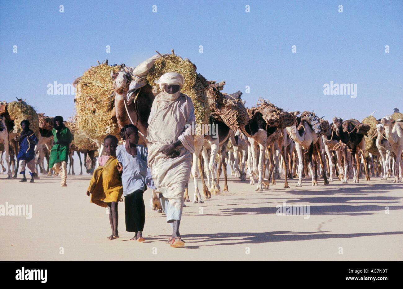 Niger Tenere Tuareg tribe doing traditional salt caravan from Agadez to the oases Fachi and Bilma - Stock Image