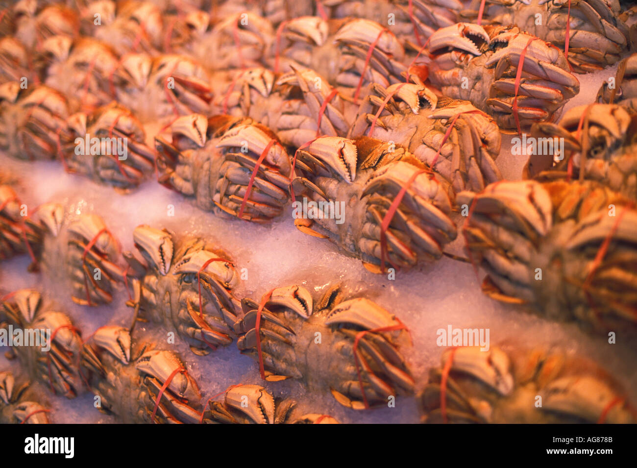 Crabs for sale at fish market - Stock Image