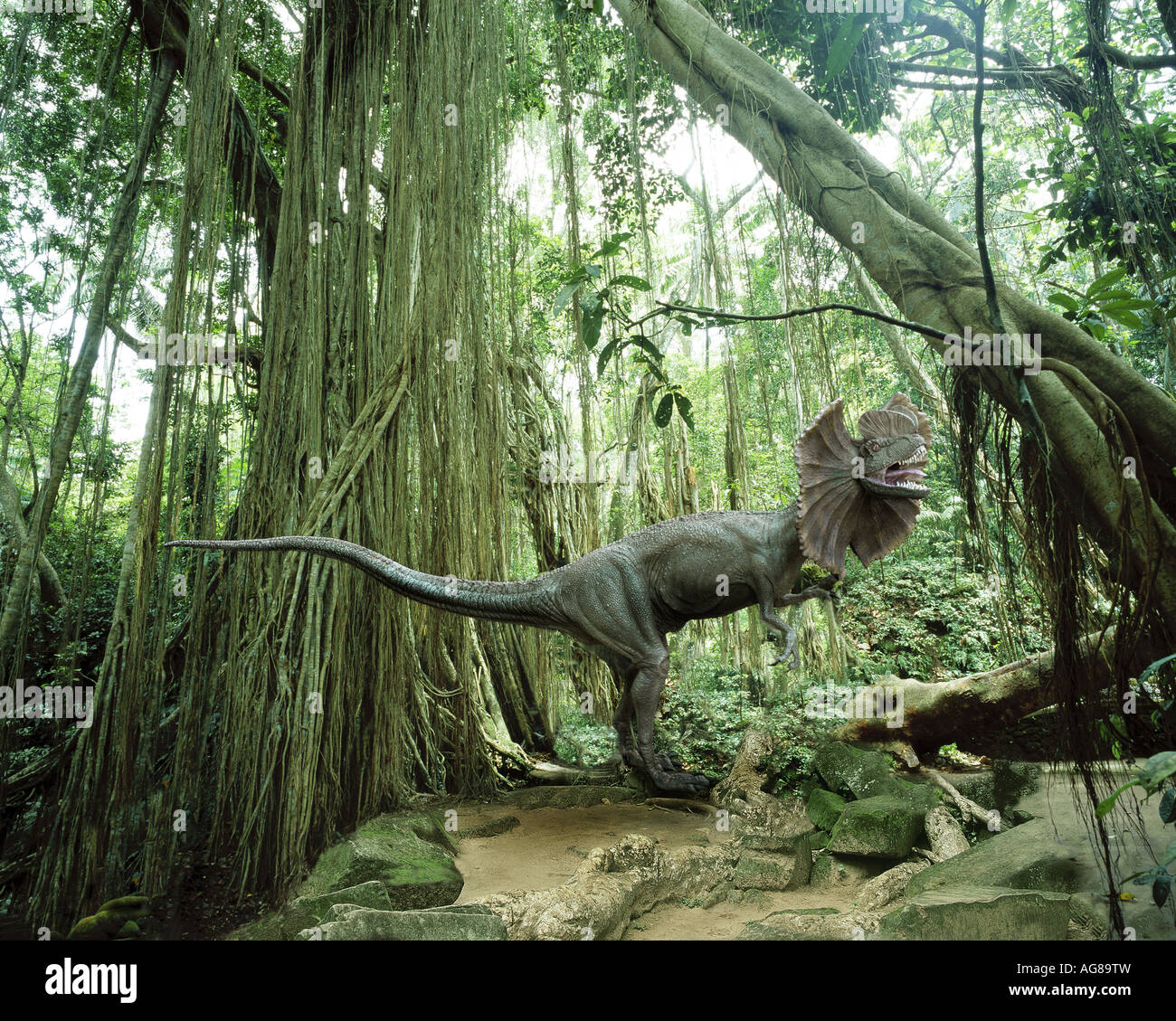 Dilophosaurus (the 'spitter') dinosaur in a tropical jungle environment - Stock Image