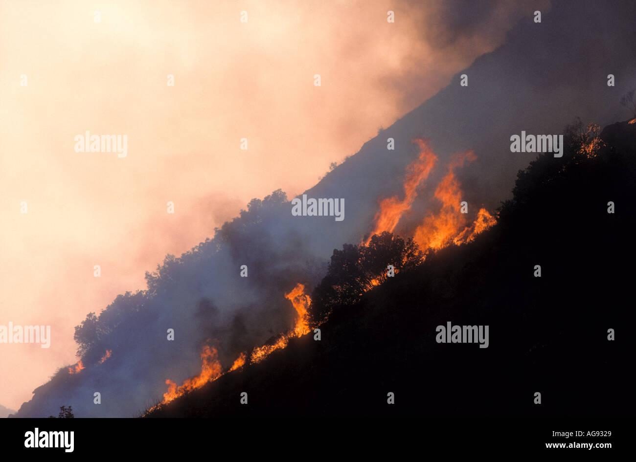 Wildfire burning up hillside in California USA - Stock Image