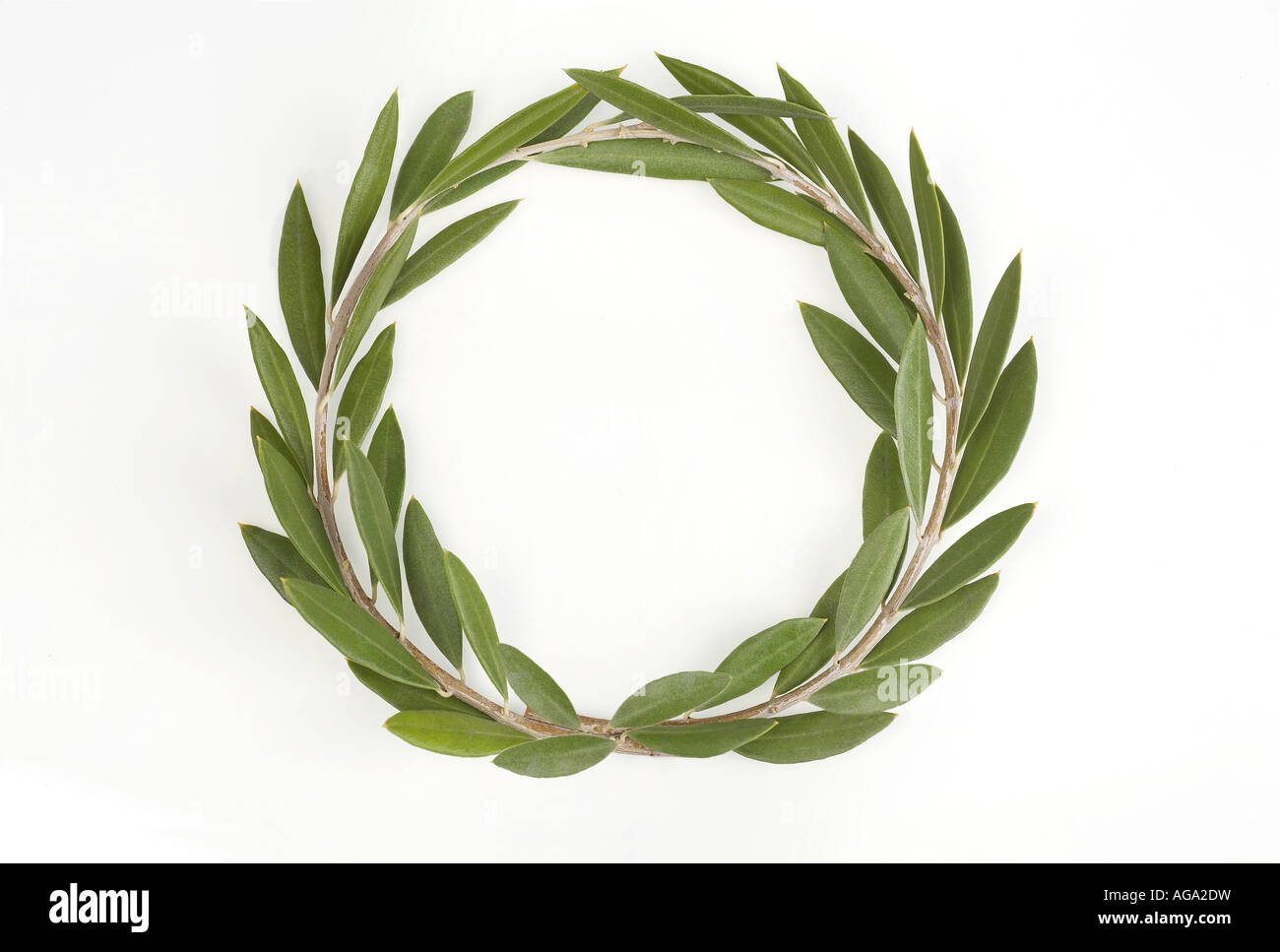 Wreath from olive tree - Stock Image