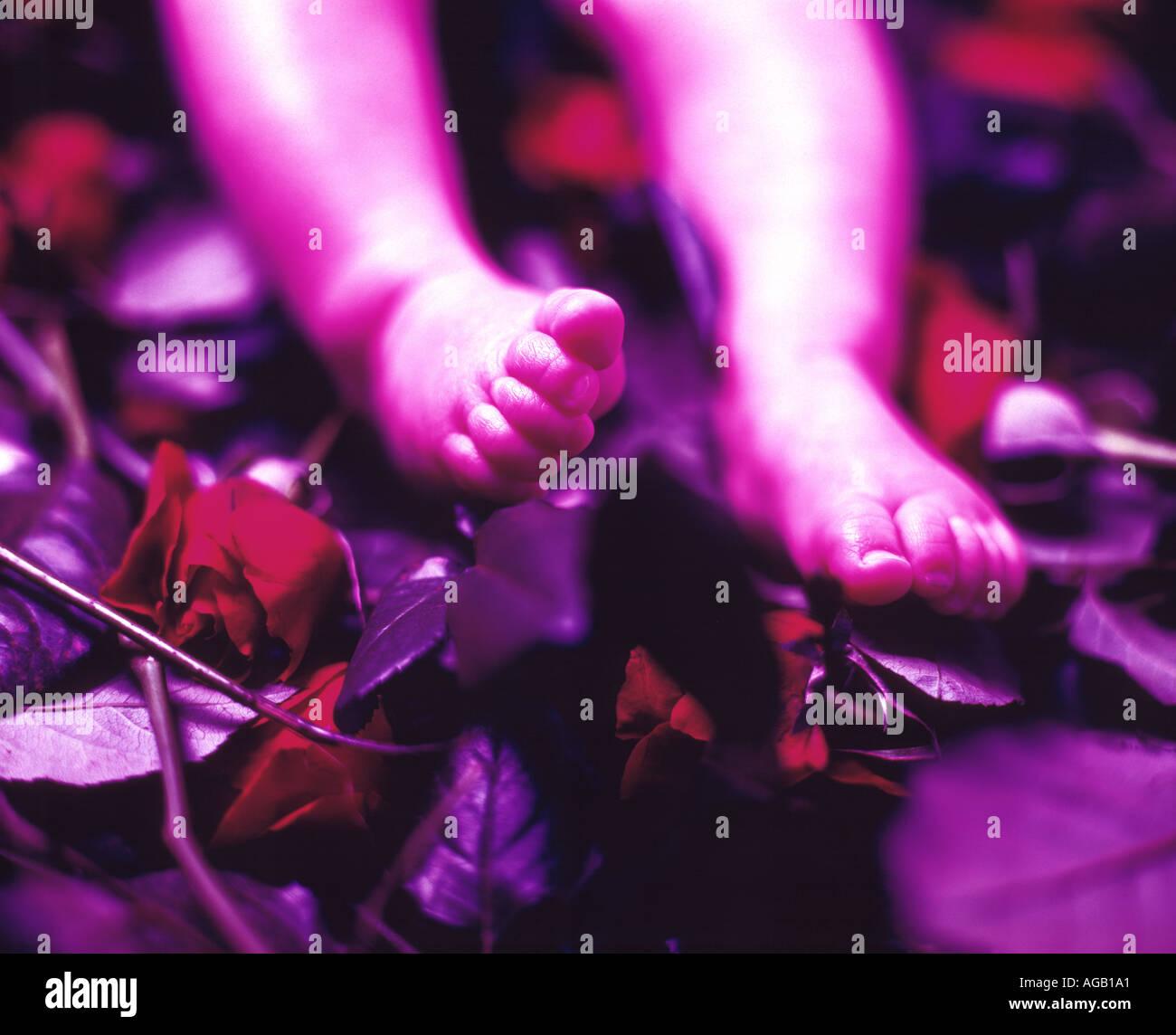 babies feet on rose buds - Stock Image
