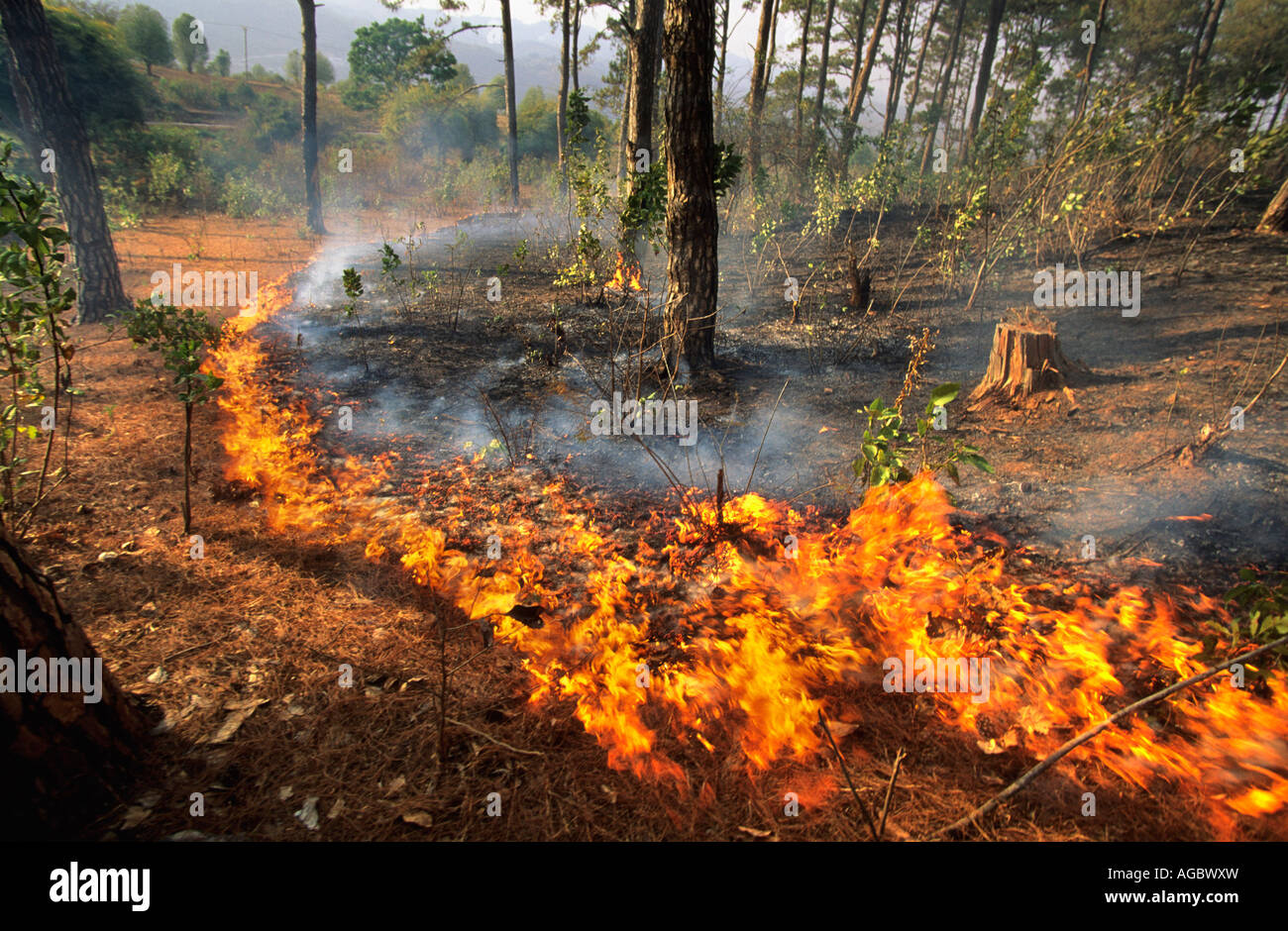Myanmar, Kalaw, Fire in forest - Stock Image