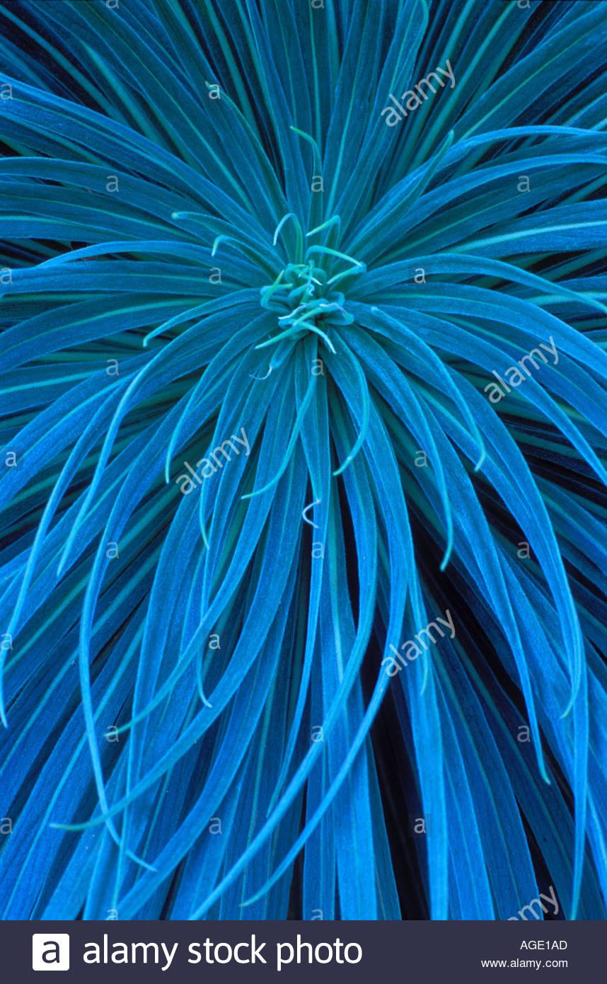 Plant leaf pattern Stock Photo
