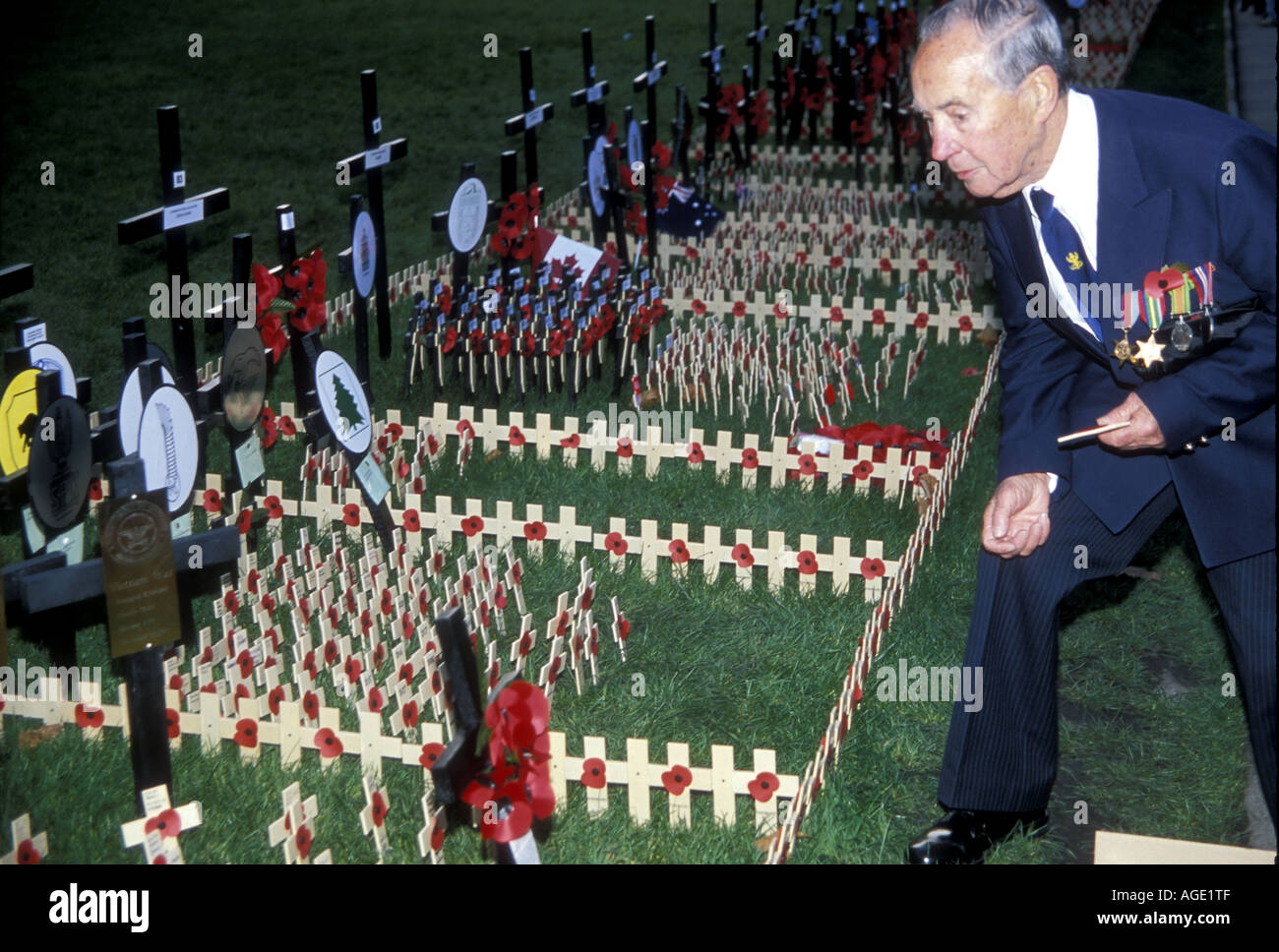 An old soldier places a cross for the war dead from his battalion on Armistice Day, Westminster Abbey lawns,  London - Stock Image