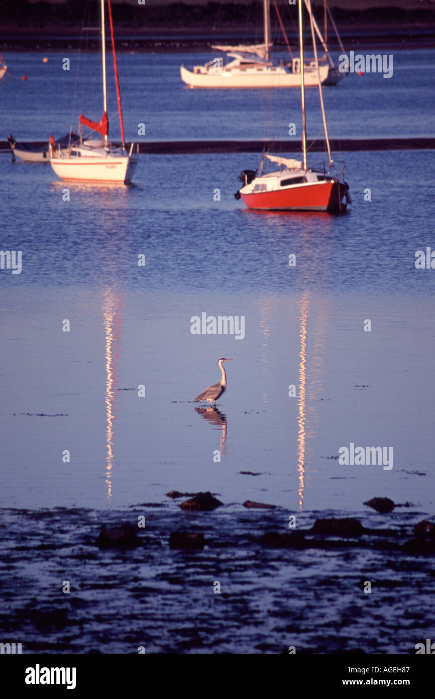 View across Exe estuary from Starcross to Exmouth with Heron in foreground - Stock Image