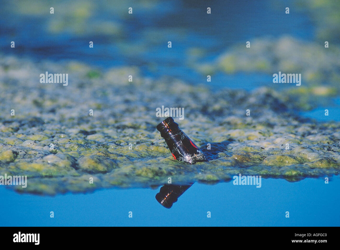 Beer bottle tossed in polluted lake - Stock Image