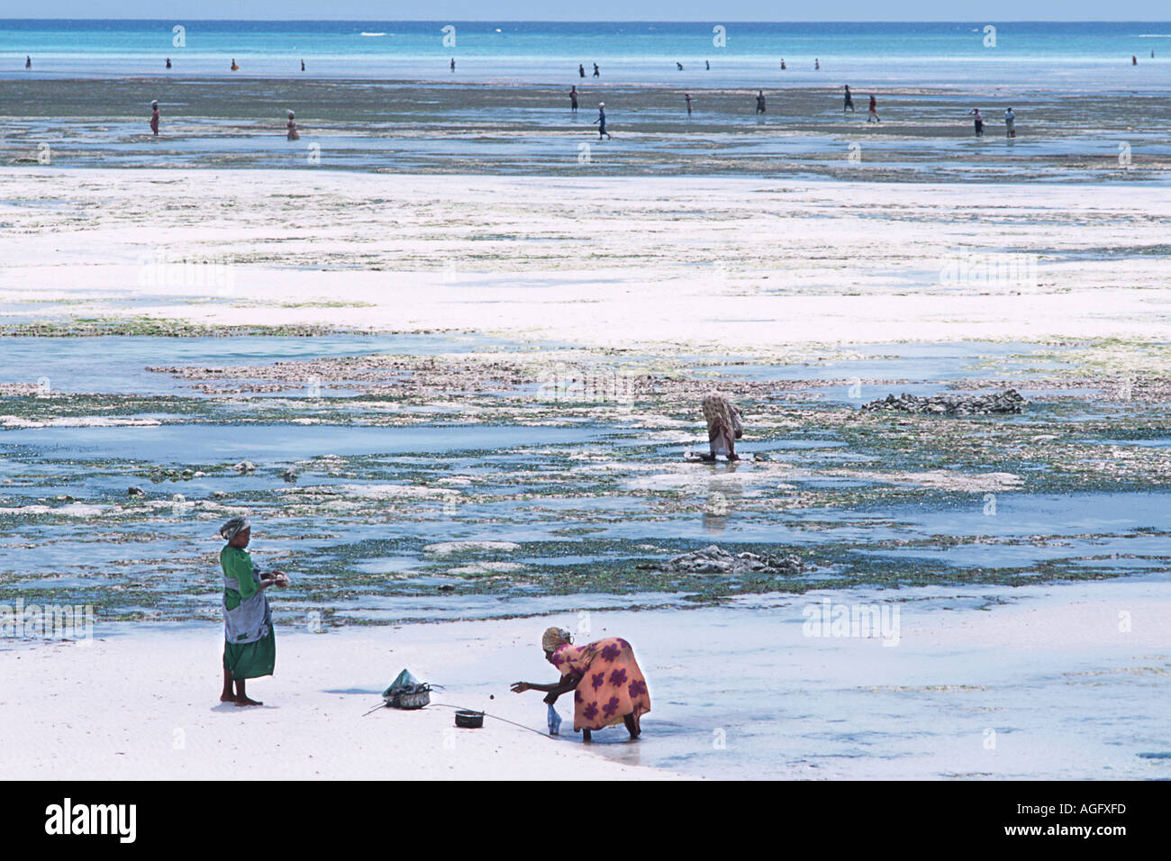 Women on the beach at low tide to collect seashells and seaweed Nungwi Northern Unguja Zanzibar East Africa - Stock Image