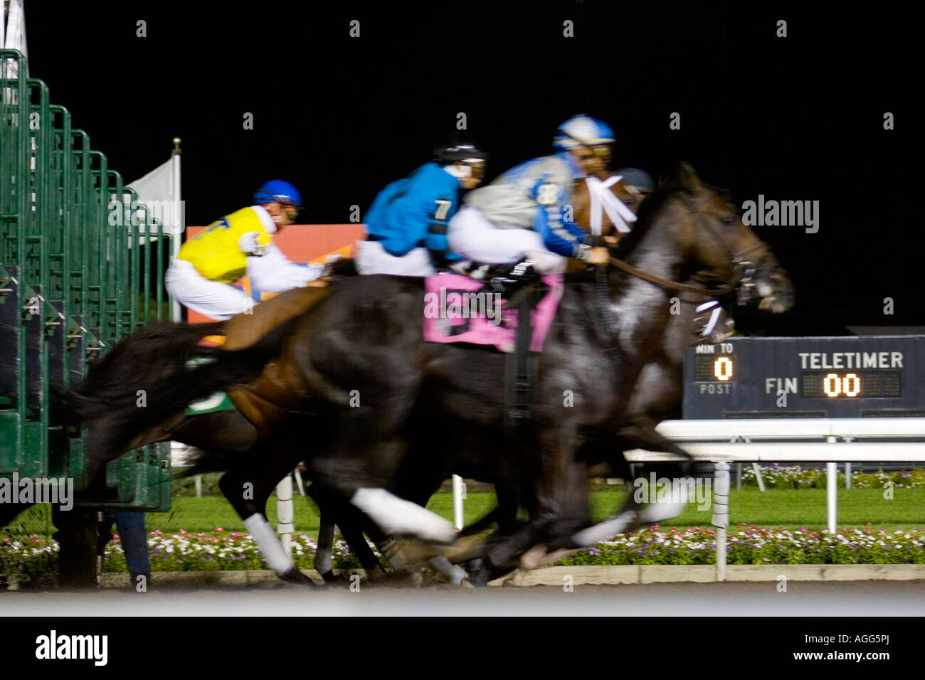 thoroughbred night racing at the starting gate - Stock Image