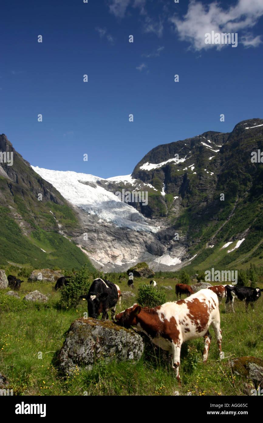Norwegian Heidi Land. Ostedals Breen (Glacier}.  Norway - Stock Image