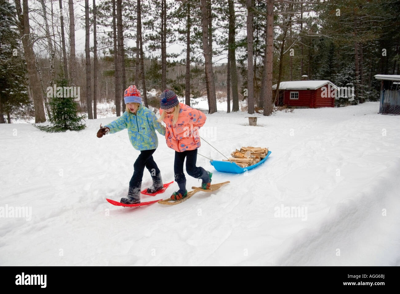 Two young girls on snowshoes pull a sled stacked with firewood Ely Minnesota winter - Stock Image
