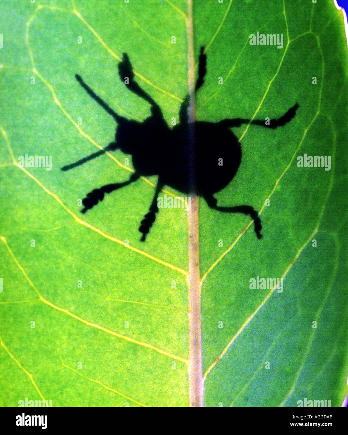 shadow of a bug on a leaf - Stock Image