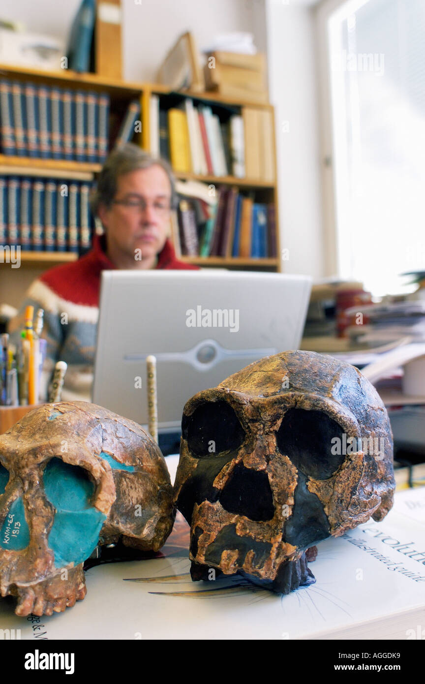 Professor of anthropology with sculls of prehistoric primates (Homo Habilis and Homo Erectus), Museum of Natural History - Stock Image
