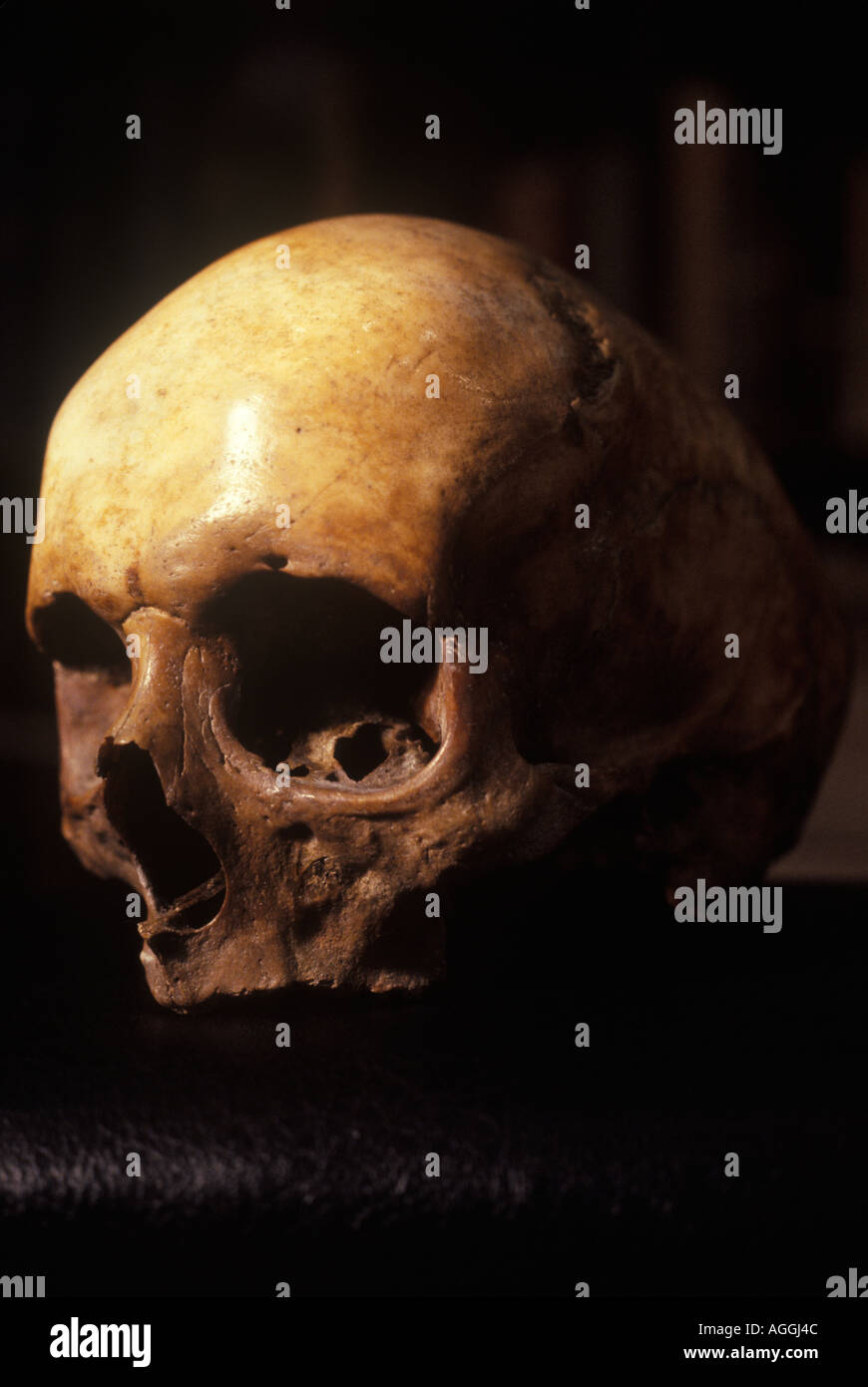 Emanuel Swedberg, later known as Swedenborg,. His skull sold at Sothebys 1978.  HOMER SYKES - Stock Image