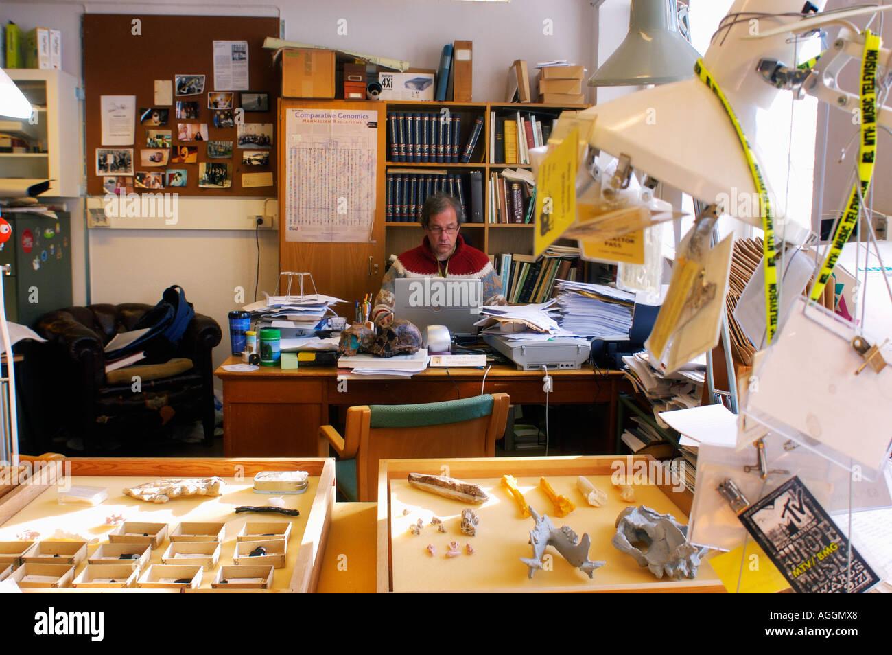 Professor of anthropology with sculls and bones of prehistoric primates (Homo Habilis and Homo Erectus) - Stock Image