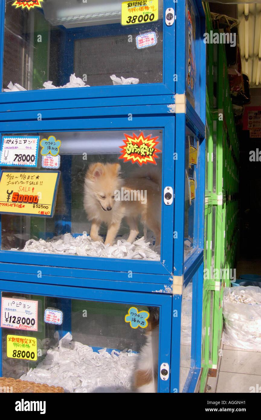 Pet Store With Puppies For Sale Shinjuku Tokyo Japan