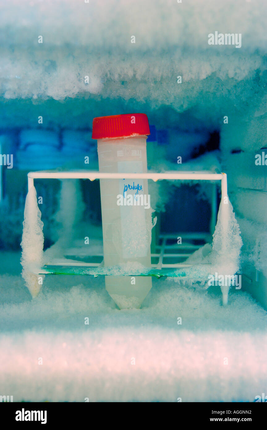 sample in freezer containing extracted DNA - used in molecular biology and microbiology - Stock Image