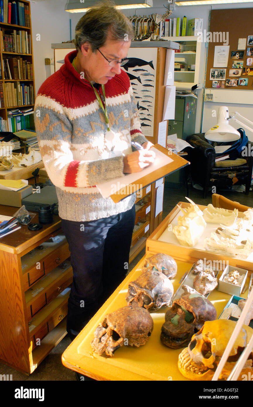 Professor of anthropology with sculls and bones of prehistoric anmals and primates (Homo Neanderthaleusis, Homo Habilis... - Stock Image