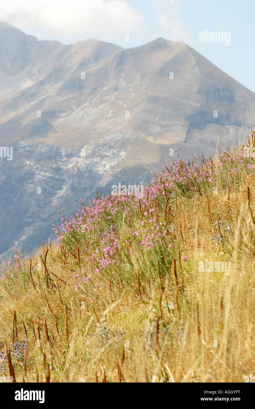 Grasses  blowing on the mountainside in the Sibillini National Park,Le Marche Italy - Stock Image