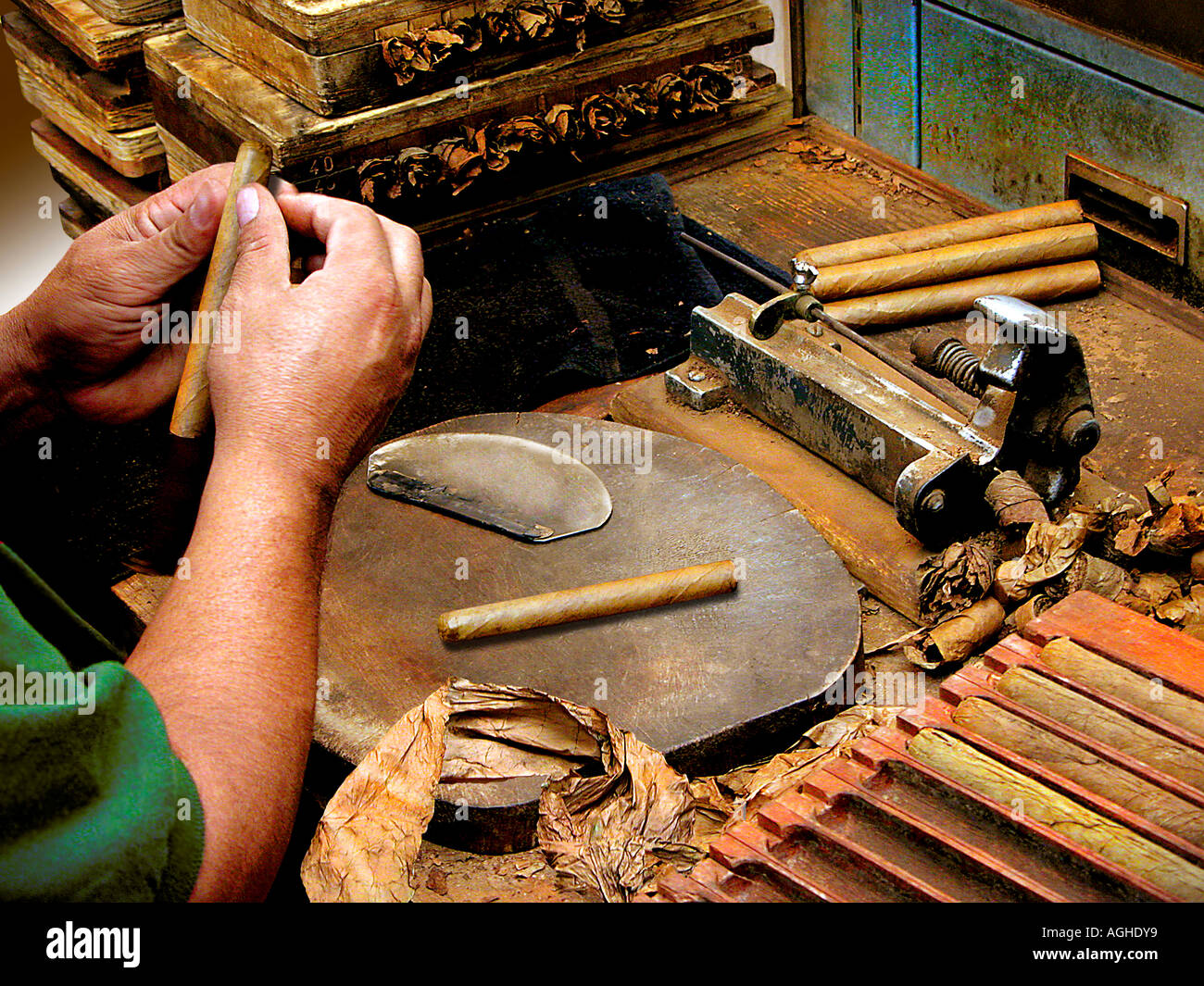 A cigar maker rolling handmade cigars Stock Photo: 8122232