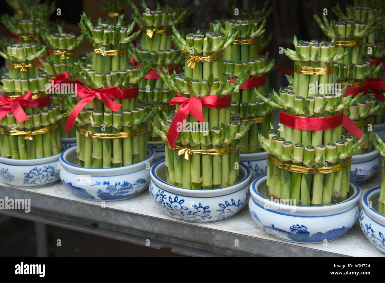 Decorative Water Bamboo Plants For Feng Shui Ornamental Decoration