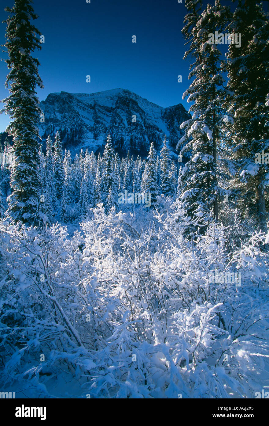 winter snow scene near Lake Louise Rockies Banff National Park Alberta Canada - Stock Image
