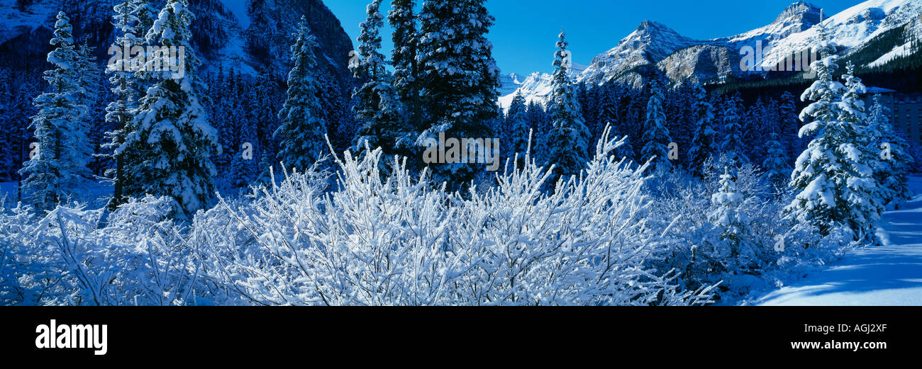 winter snow scene near Lake Louise the Rockies Banff National Park Alberta Canada - Stock Image