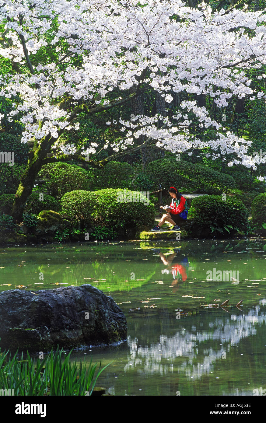 Japanese girl seated next to pond reading a book under cherry blossoms in Kyoto park in spring - Stock Image
