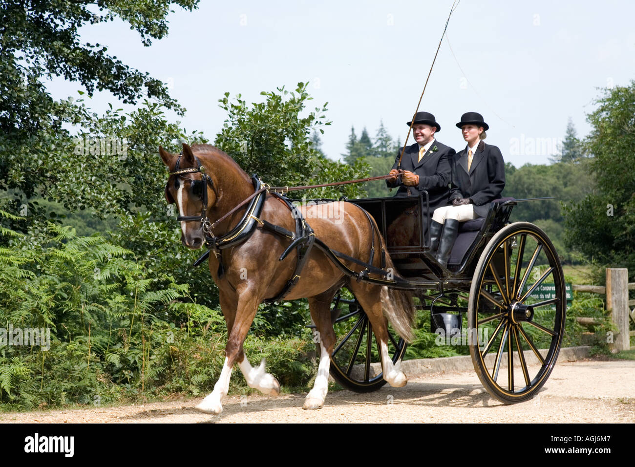 2 two wheel private carriage being pulled by one horse on New Forest Hampshire - Stock Image