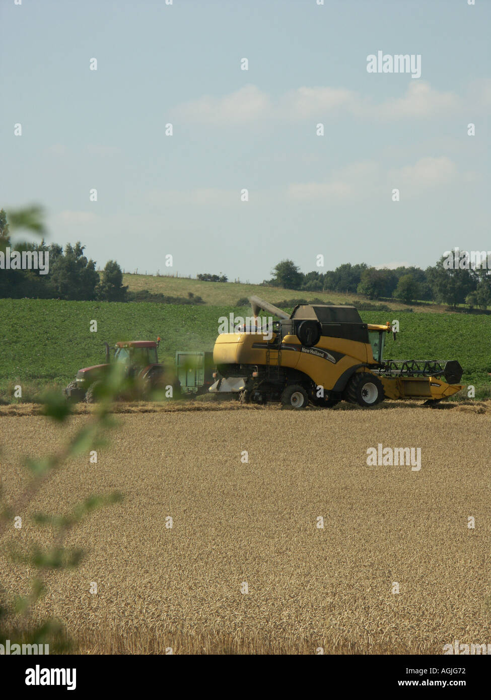 Summer harvesting in the UK with a combine harvester. - Stock Image