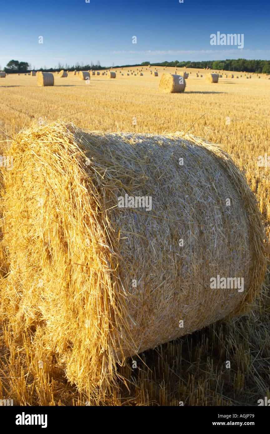 Hay Bail Closeup Dusk UK Midlands - Stock Image