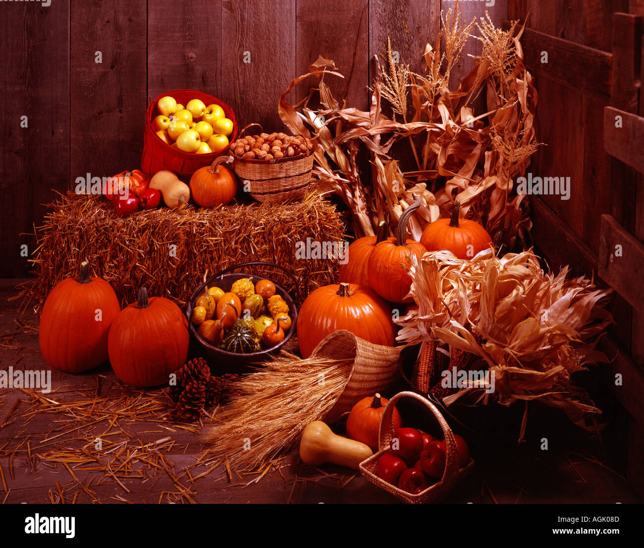 Harvest still life featuring hay bales apples corn straw pumpkins gourds pine cones cornucopia against weathered barnwood - Stock Image