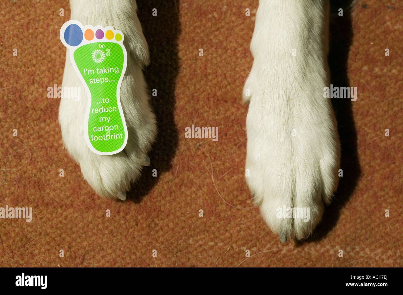 a dog with sticker on his paw about reducing your carbon footprint - Stock Image