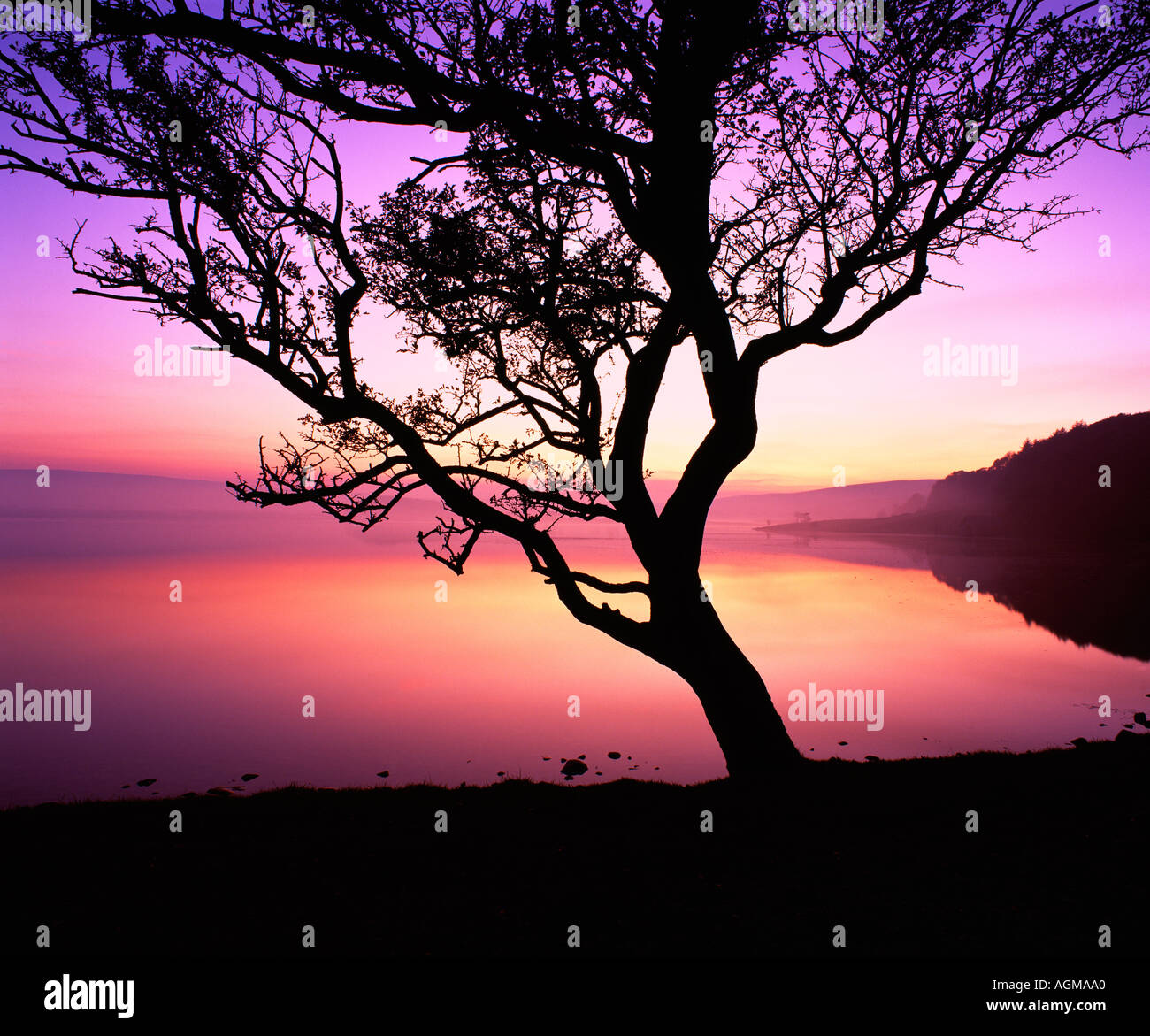 Tree and twilight at Malham Tarn, in the Yorkshire Dales National Park. - Stock Image