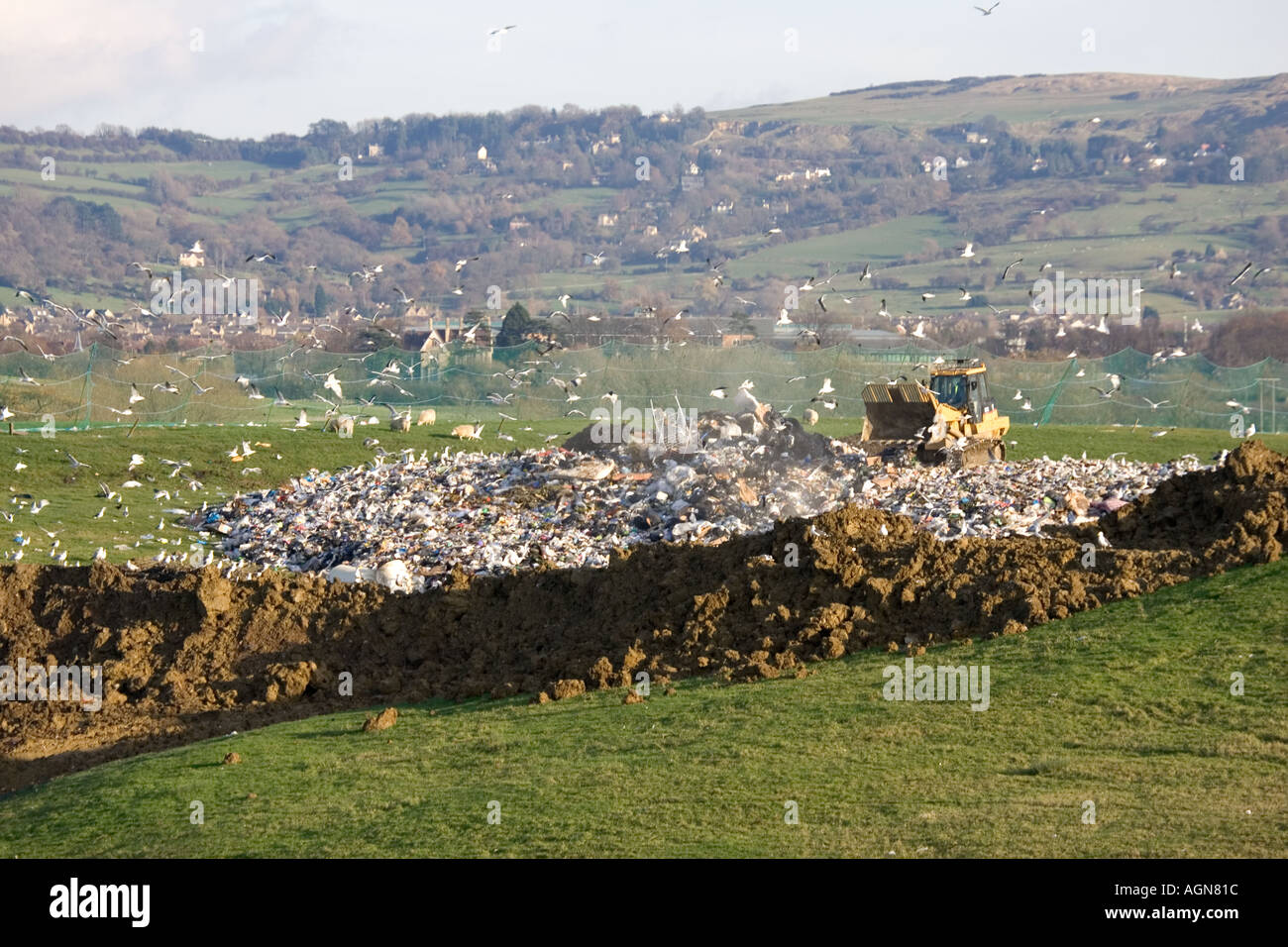 Gulls circling by bulldozer working on landfill site in Cotswolds Wingmoor Farm Cory Environmental UK - Stock Image