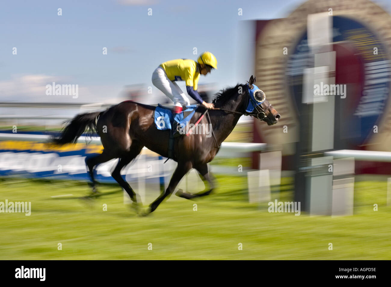 Winning a race - horse racing at the finishing / winning post - Stock Image