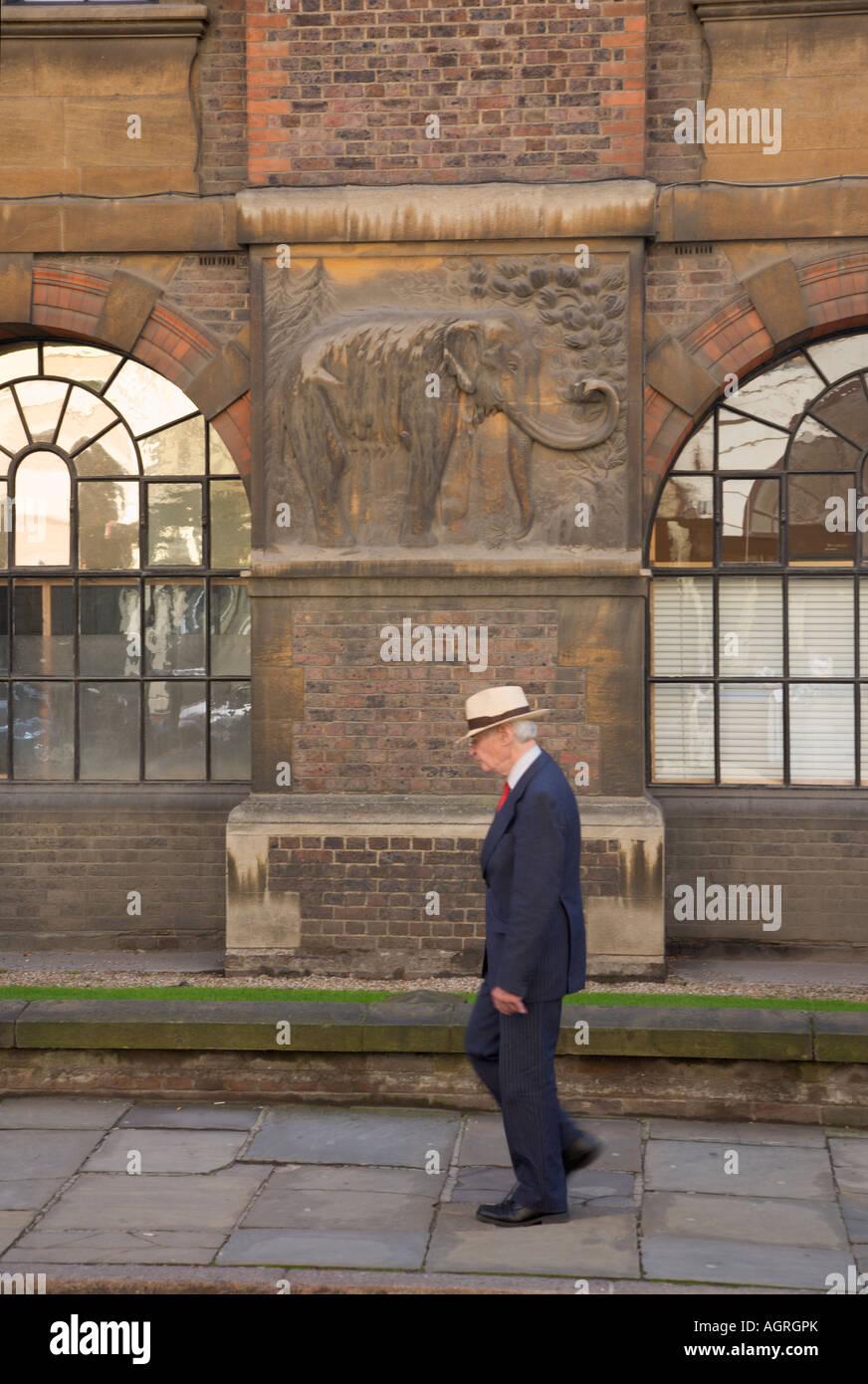 Smartley dressed ederley gentleman walking past the Zoology Museum Cambridge Cambridgeshire England - Stock Image