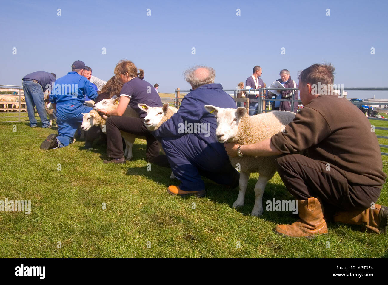 dh Annual Show SHAPINSAY ORKNEY Judge judging best pair of lambs at agricultural show Stock Photo