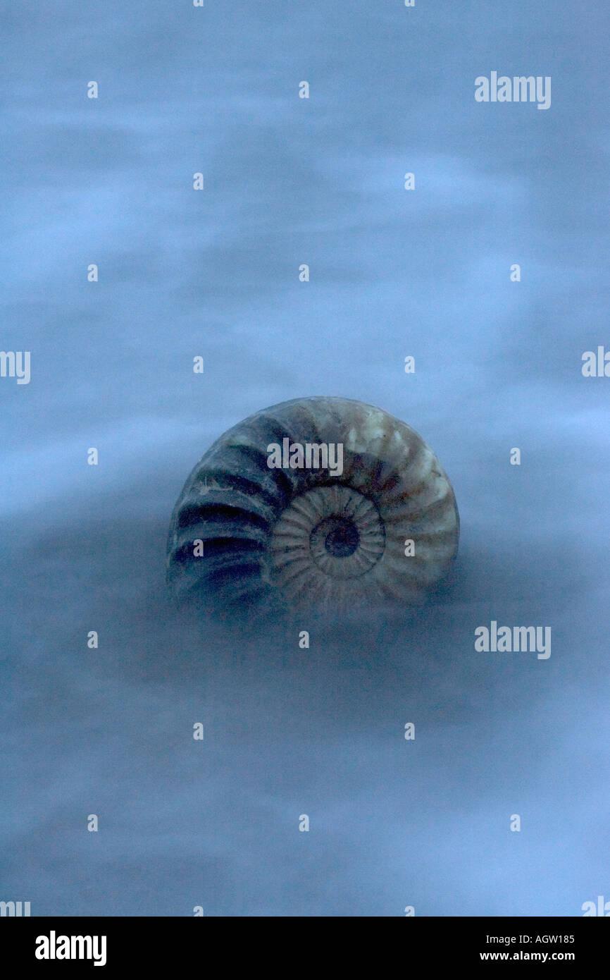 Ammonite fossil  in sea - Stock Image
