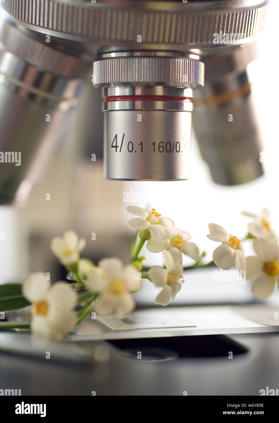 Closeup of flowers under a microscope - Stock Image