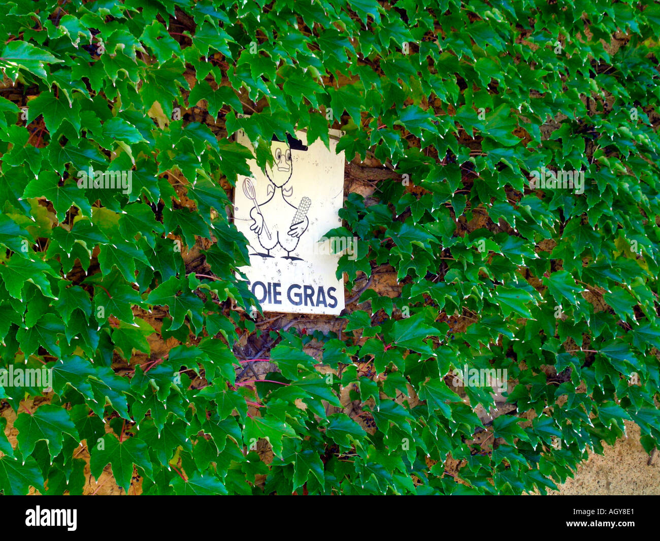advertising for foie gras goose liver pasty on a house wall in Gascogne France - Stock Image