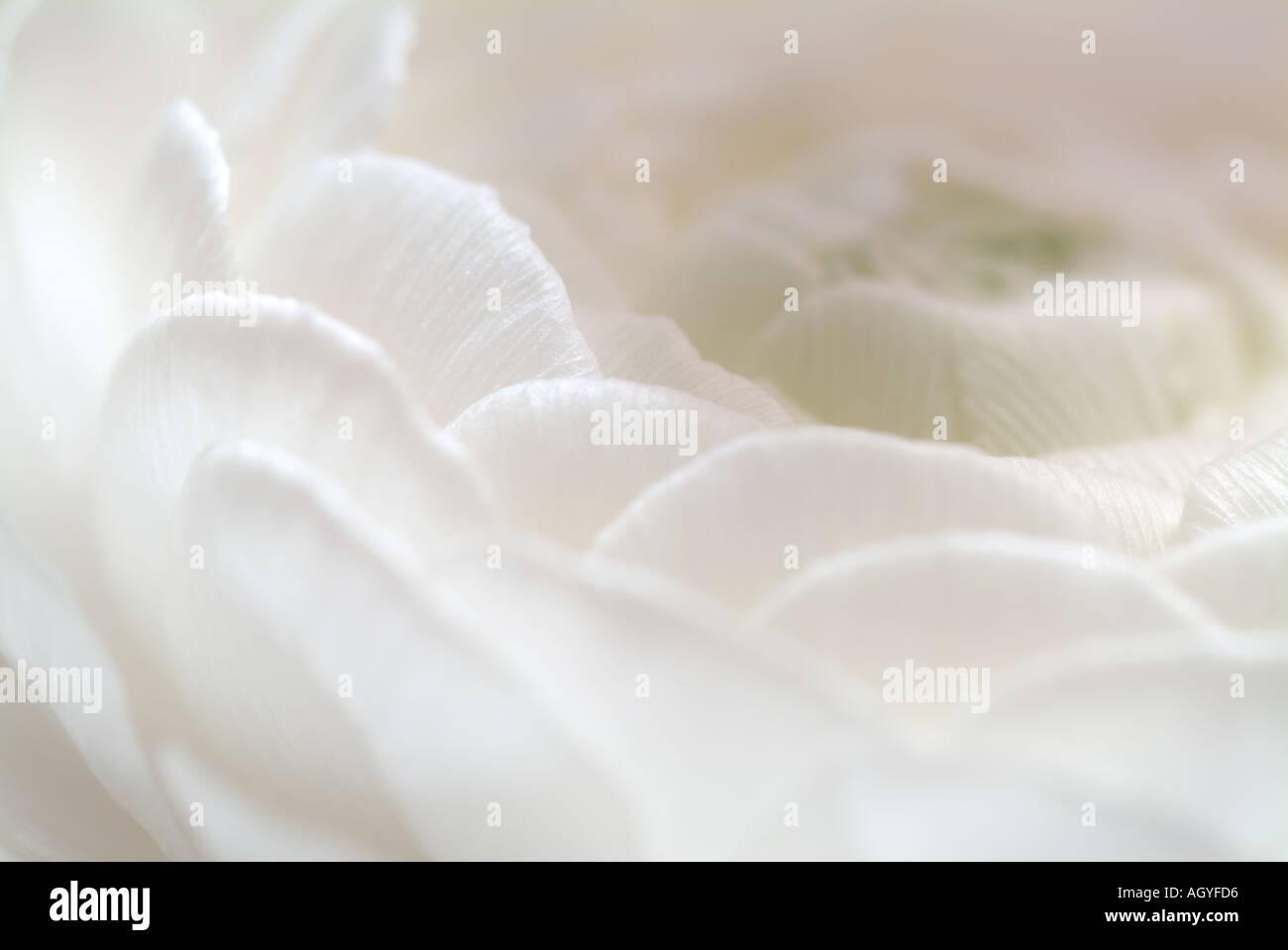 White Flower Detail - Stock Image