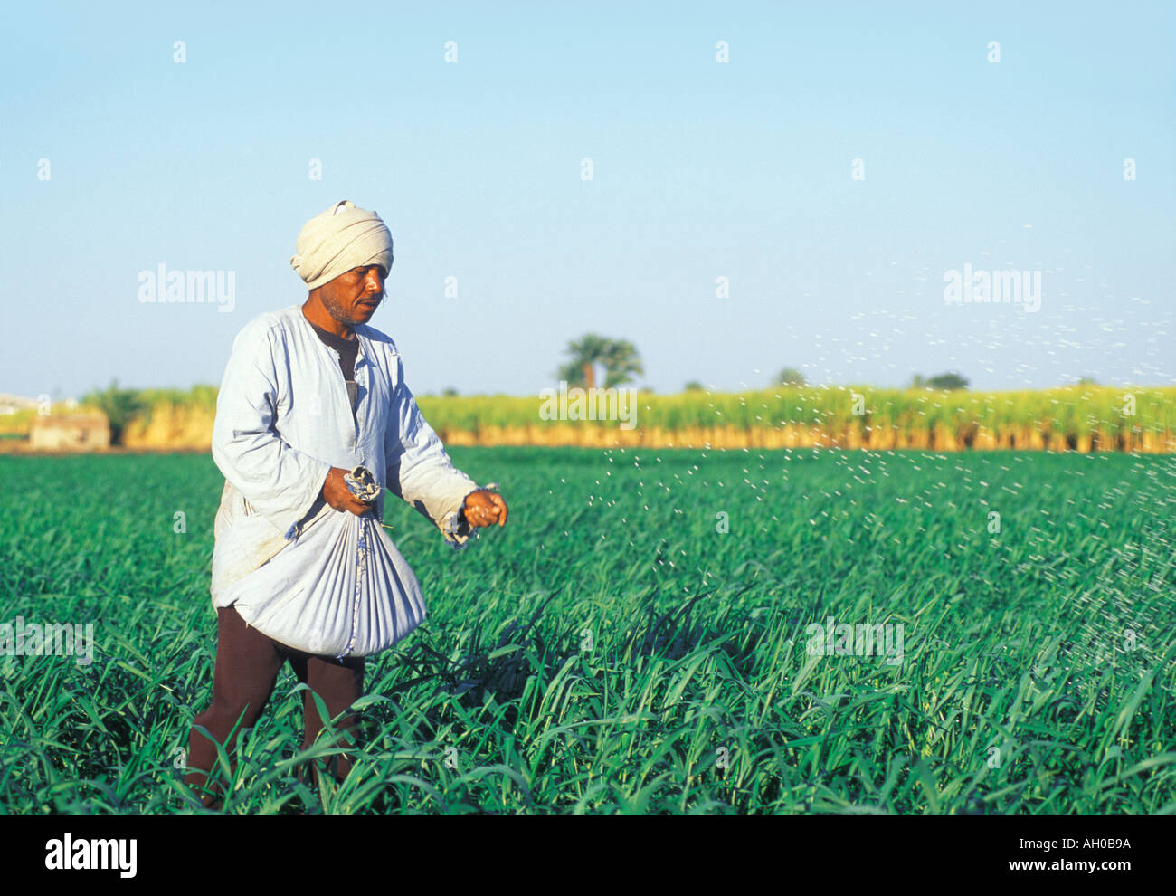 EGYPT LUXOR PEASANT SOWING GRAIN  - Stock Image