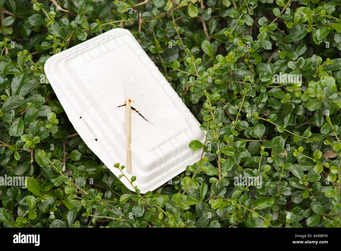 Polystyrene container and chopsticks littering bushes - Stock Image