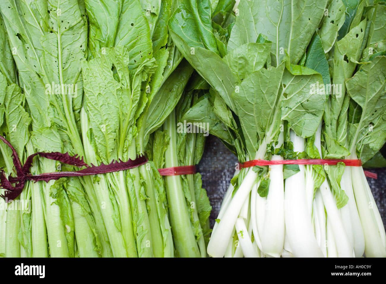 Bundles of mustard greens and bok choy - Stock Image