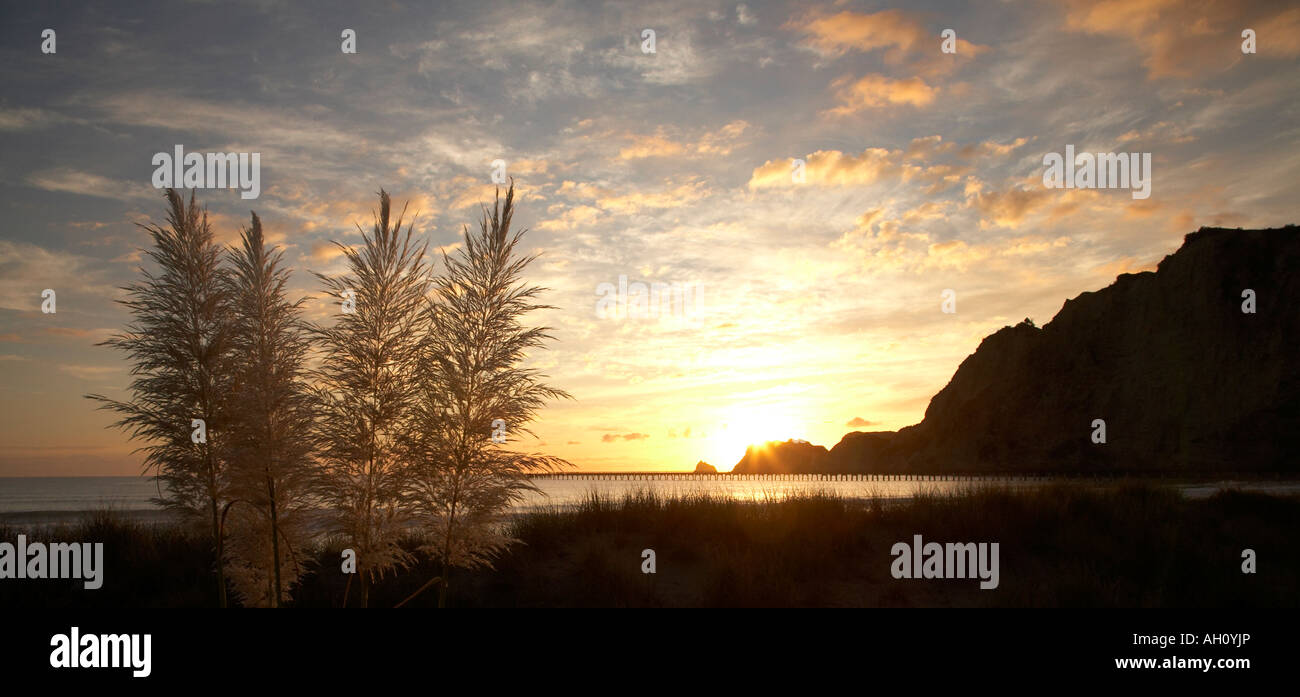 sunrise over sand dune light hitting grasses tolaga bay - Stock Image
