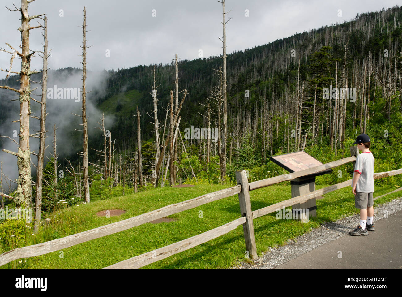 Boy reading interpretive sign on Clingman's Dome Trail, Great Smoky Mountains National Park - Stock Image